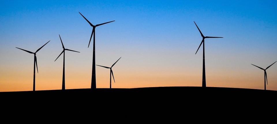 Image result for windkraftanlagen toten täglich milliarden insekten
