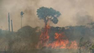 Umweltorganisation WWF schlägt Alarm