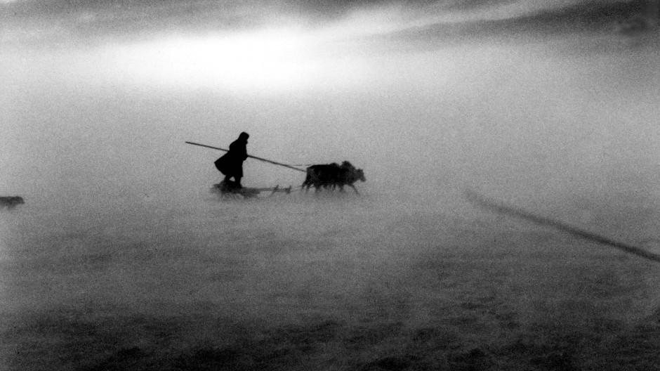 Damit im Schneesturm kein Tier verloren geht, wacht der sibirische Hirte über die Rentierherde.