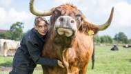 Anna Butz, Landwirtin in der Rinderzucht, streichelt ihren Ochsen Obelix in Tangstedt auf ihrer Weide.