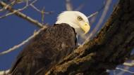 Viele Tiere verenden in Nordamerika an einem natürlichen Nervengift