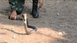 Soldaten trinken Kobra-Blut und essen Insekten