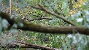 Mann nackt im Wald ausgesetzt