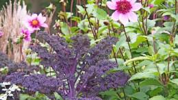 Wie man im Beet Gemüse perfekt mit Blumen kombiniert