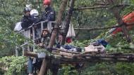 Mit einem Hubwagen versuchen die Polizisten einen Umweltaktivisten vom Baum zu holen.