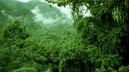 Afrikas Bergregenwälder als Kohlenstoffspeicher massiv unterschätzt