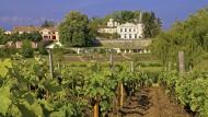 Der Weinberg vor dem Château Lafite Rothschild