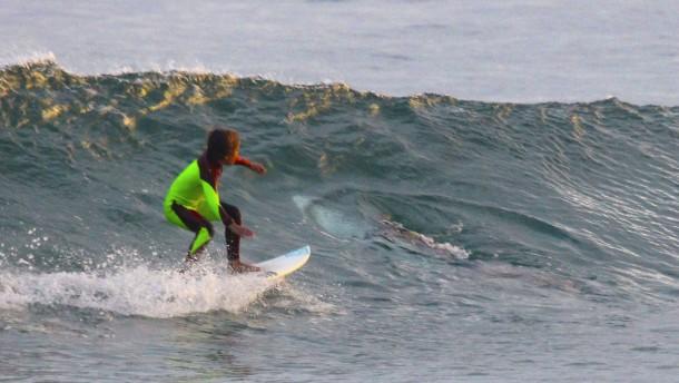 Stahltisch Trifft Auf Weisse : Junger surfer trifft vor australien auf einen hai