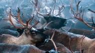 Rudolph leidet unter dem Klimawandel