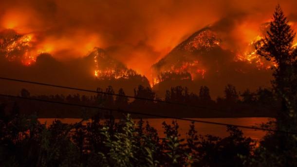 Warum immer mehr Wälder brennen