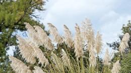 Lasst Gras drüber wachsen