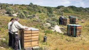 Warum Imker ihre Bienen auf Baltrum aussetzen