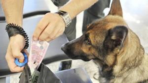 Drogenhund legt Flugverkehr lahm und wird erschossen