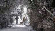 Gezuckerte Landschaft: Einen Ausflug in den Schnee genießen Mensch und Hund gleichermaßen. In diesem Fall handelt es sich allerdings um sogenannten Industrieschnee, der in diesem Winter schon mehrfach über dem Frankfurter Stadtteil Sossenheim niedergegangen ist.