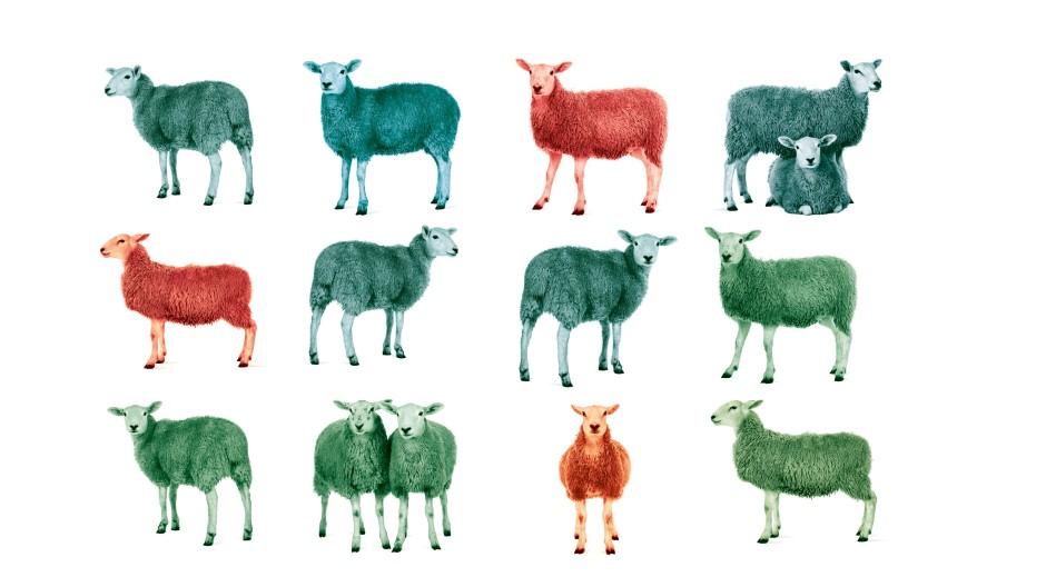 Zum Glück keine schwarzen Schafe: Herdenimmunität bleibt wohl ein unerreichbares Ziel.