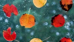 Kein goldener Oktober: Wetter bleibt trüb und nass