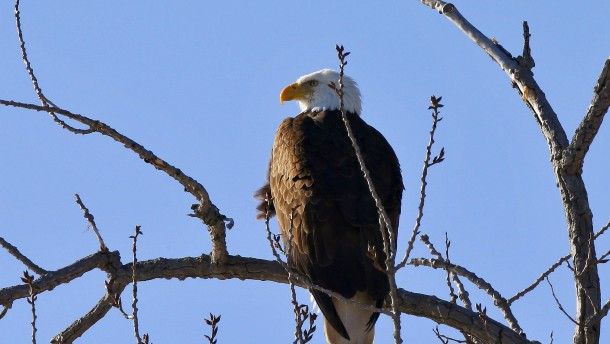 Trump-Regierung weicht Artenschutzgesetz auf