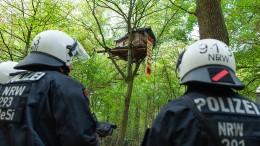 Polizei räumt erste Baumhäuser