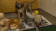 Gepard und Hund unzertrennlich