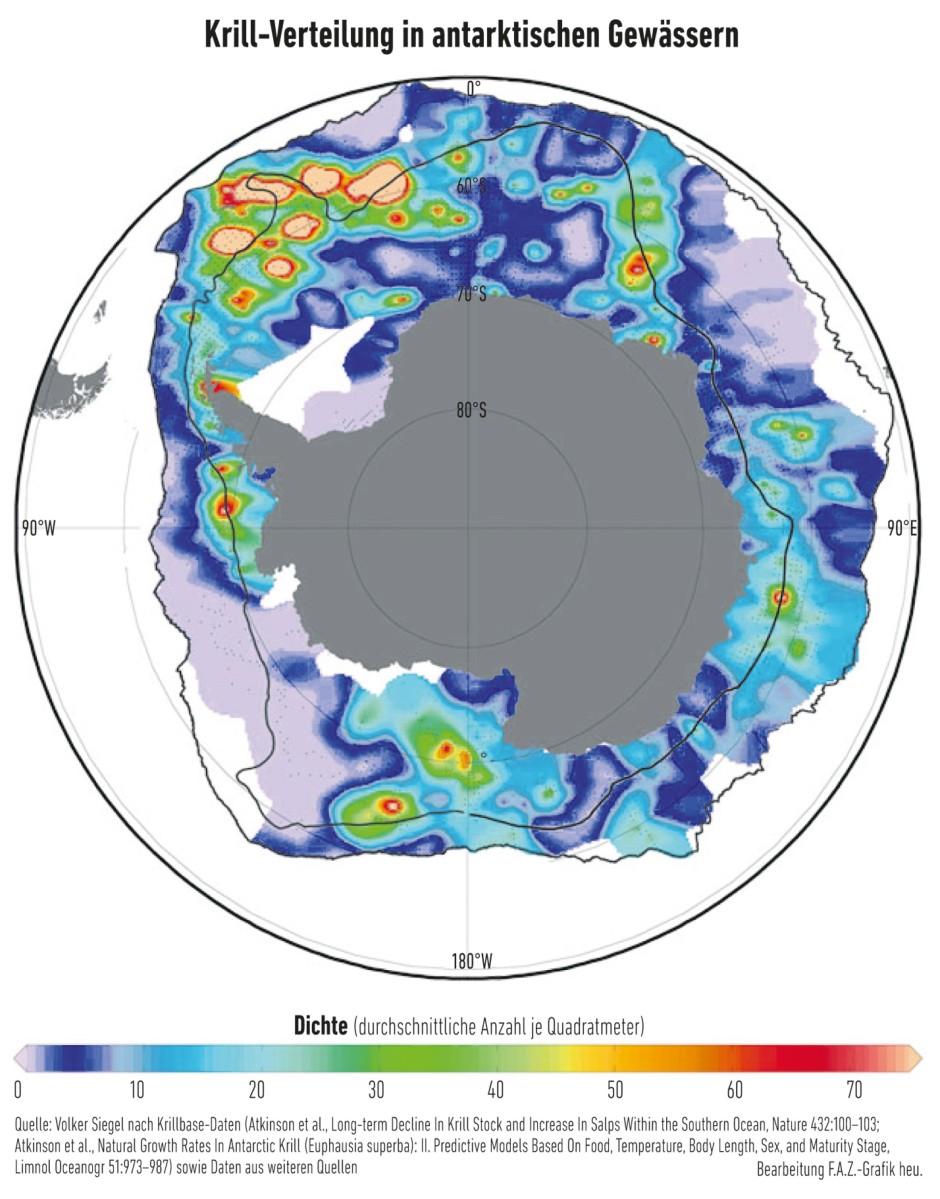 """Rund um den antarktischen Kontinent (grau) ist Krill alles andere als gleichmäßig verteilt. Die innere schwarze Linie entspricht dem südlichen Rand des antarktischen Zirkumpolarstroms, die äußere steht für die """"antarktische Konvergenz"""", an der das polare Oberflächenwasser auf wärmeres Wasser aus dem Norden trifft. Diese beiden Meeresströmungen markieren den Lebensraum des Antarktischen Krills, sorgen sie doch dafür, dass hier sein Algenfutter gedeiht."""