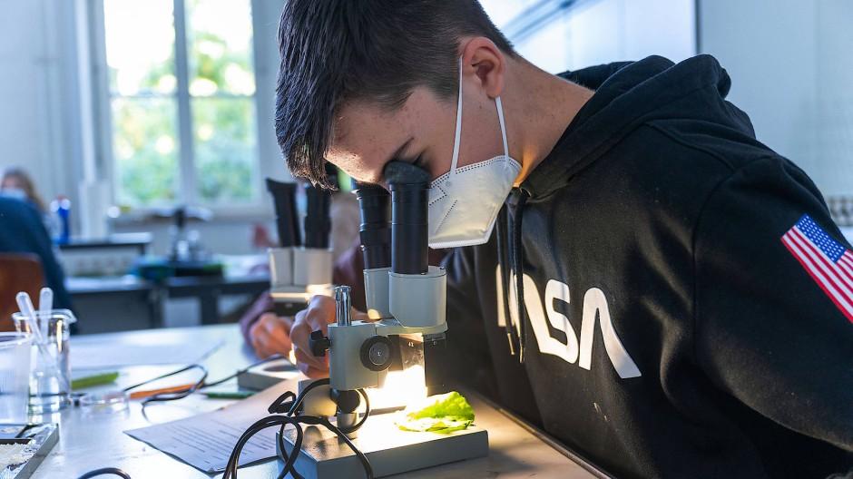 Den Lotuseffekt fest im Blick: Schüler der IGS Nordend in Frankfurt beobachten Wassertropfen auf der glatten Oberfläche eines Blatts Kopfsalat