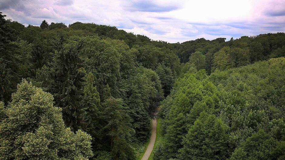 Ein Waldweg in der Nähe des Parkbades in Velbert.