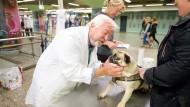 Nicht immer ist der Mops fidel: Tierarzt Fritz Merl versucht herauszufinden, was ihm fehlt.