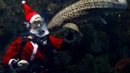 Ungewöhnlicher Besuch im Aquarium