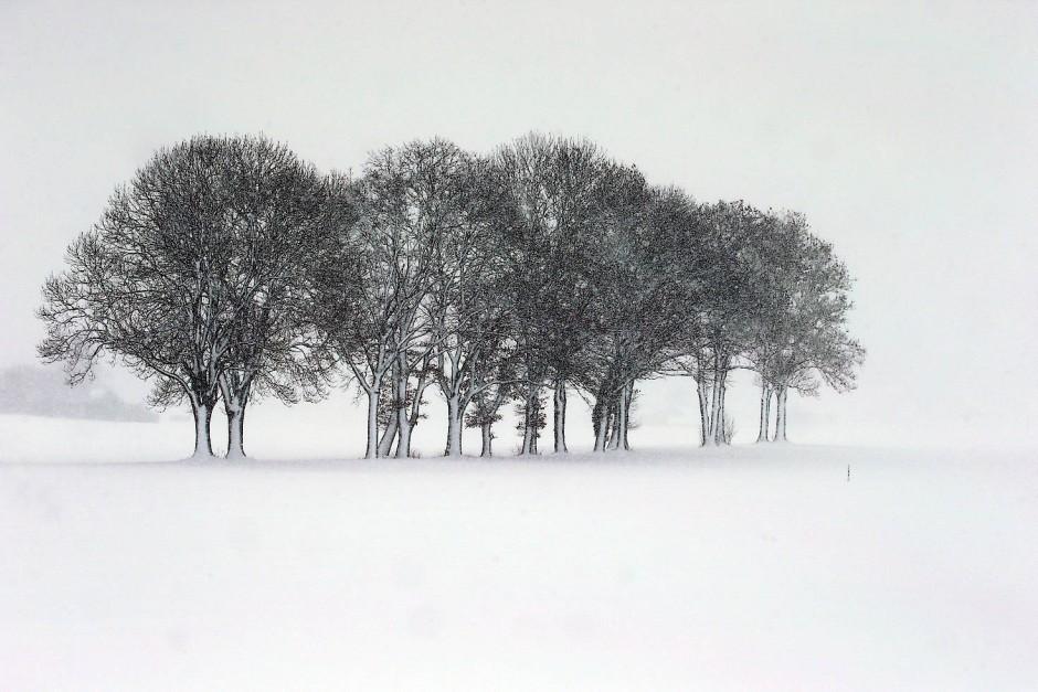 Bäume in der tief verschneiten Landschaft von Kaufbeuren.
