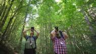 Gesundheitscheck: Förster inspizieren in einem Wald bei Wilpoldsried (Bayern) Baumkronen.
