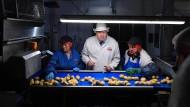 Der britische Premierminister Boris Johnson während eines Wahlkampf-Termins in einer Chips-Fabrik im nordirischen County Armagh