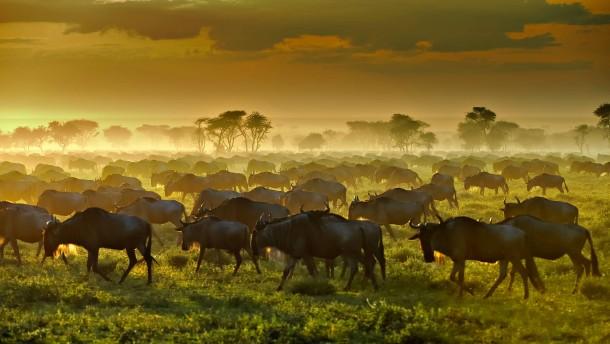 In der Serengeti wird es eng