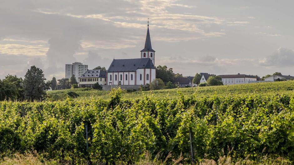 Ziel für Tagestouristen: Blick auf die Weinberge und im Hintergrund die Sankt-Peter-und-Paul-Kirche in Hochheim