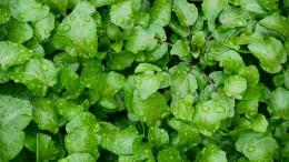 Kult-Gemüse mit Superkräften