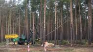 Der Westen im Osten? Die Rodung für den Bau der Tesla-Fabrik nahe Berlin ist vorerst gestoppt. Erinnerungen an den Hambacher Forst werden wach.