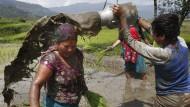 30. Juni 2015 Matschepampe à la népalaise: Am letzten Junitag, dem Asar Pandra, geht in Nepal nicht nur die Erntesaison für Reis los, sondern auch das große Matschvergnügen. Die Bauern gießen sich gegenseitig Matschbrühe über den Kopf und bereiten sogar Reisgerichte mit Schlammsoße zu. Der Schlamm wird als Vorzeichen für eine ergiebige Ernte gedeutet.