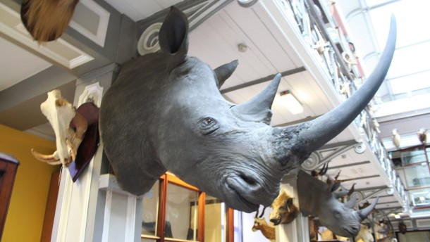 Rhino horns and heads worth half a million Euros stolen from Dubl