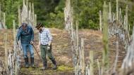 Klimawandel lässt Wein in Patagonien gedeihen