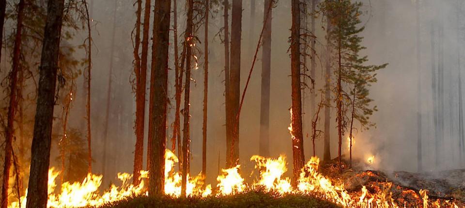 Schweden Waldbrände Karte.Waldbrände In Schweden Sind Völlig Außer Kontrolle