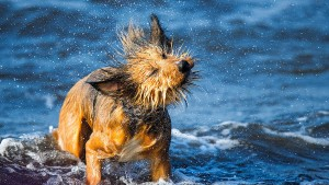 Hund aus Versehen im Trockner getötet