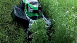 Der beißt ins Gras und verliert seine Farbe