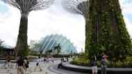 """Supertrees: Die neuen Wahrzeichen im """"Garden by the bay"""" sind schon von fern zu erkennen"""