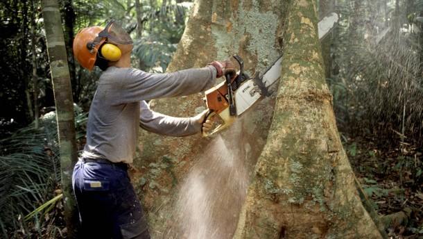 Norwegen stellt Zahlungen für Amazonas-Fonds ein