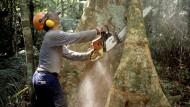 Ein Holzfäller fällt in Manaus in Brasilien einen Baum im Amazonas-Regenwald.