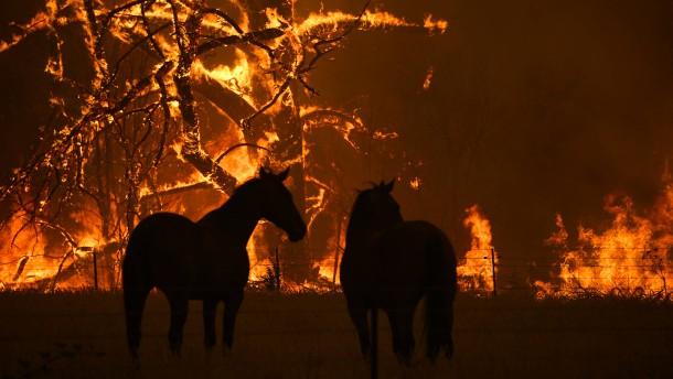 Frau entkommt den Flammen auf dem Rücken ihres Pferdes