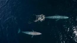 Wale zeigen sich von ihren besten Seiten