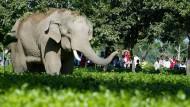 Elefanten-Alarm per SMS