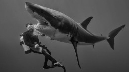 Auf Tuchfühlung mit Haien