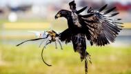 Kanonen gegen Drohnen