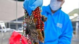 Illegaler Handel mit exotischen Tierteilen